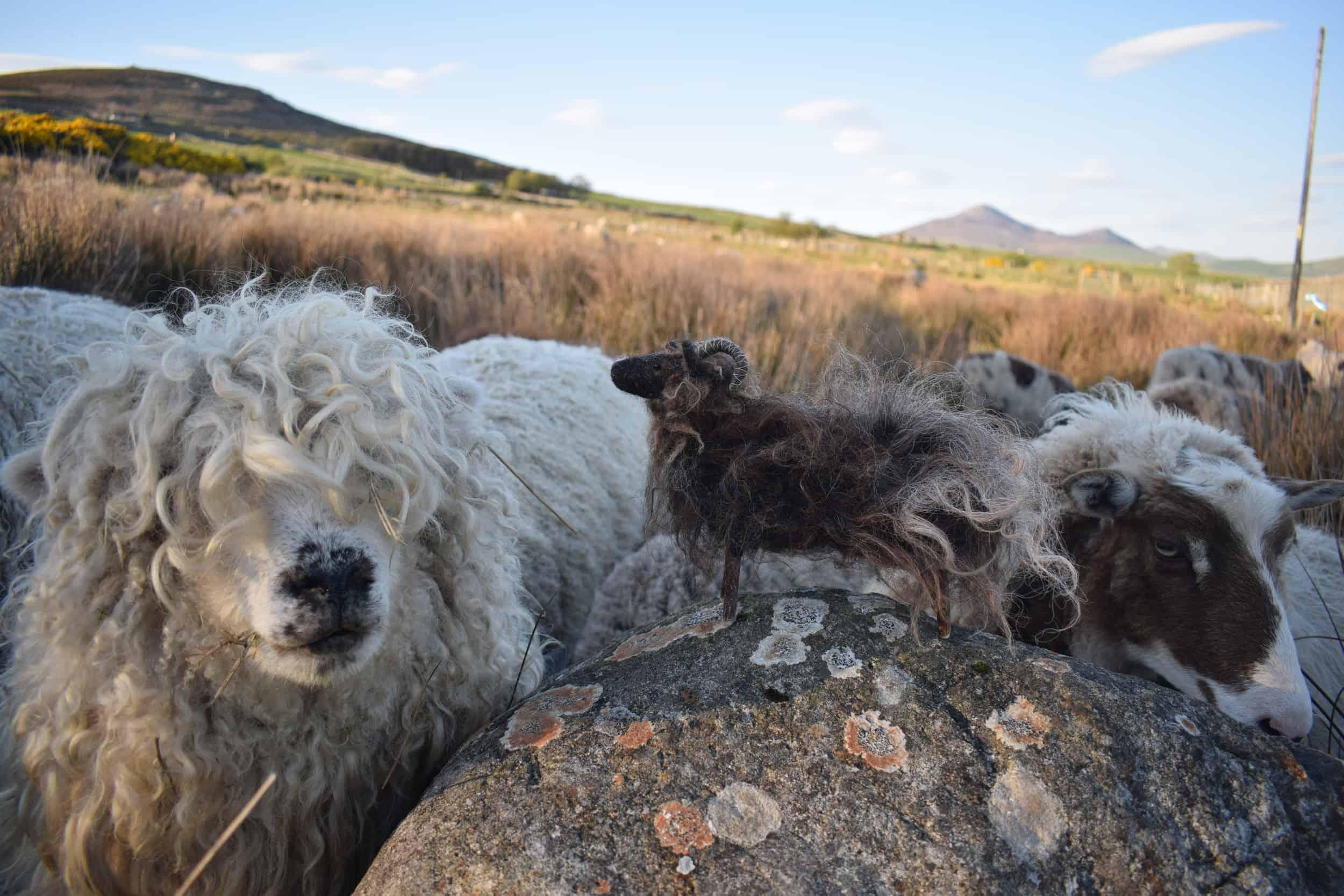 merry greyface dartmoor sheep needle felte sheep wool