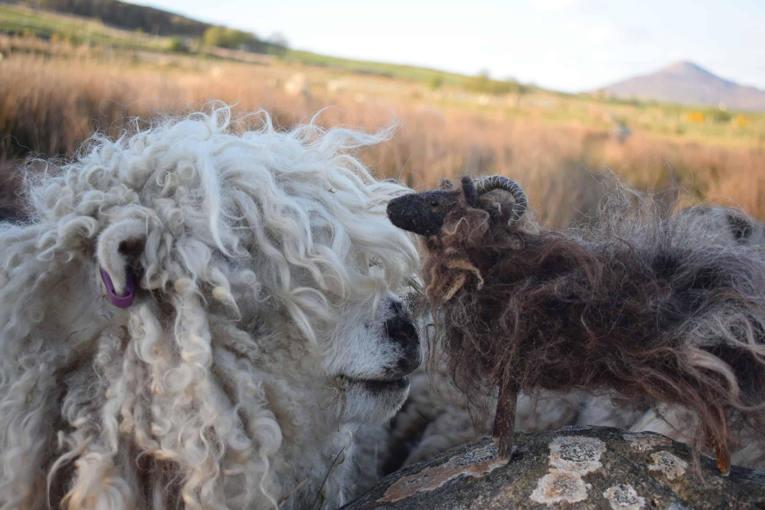 merry greyface dartmoor sheep needle felte sheep wool cute hairdo
