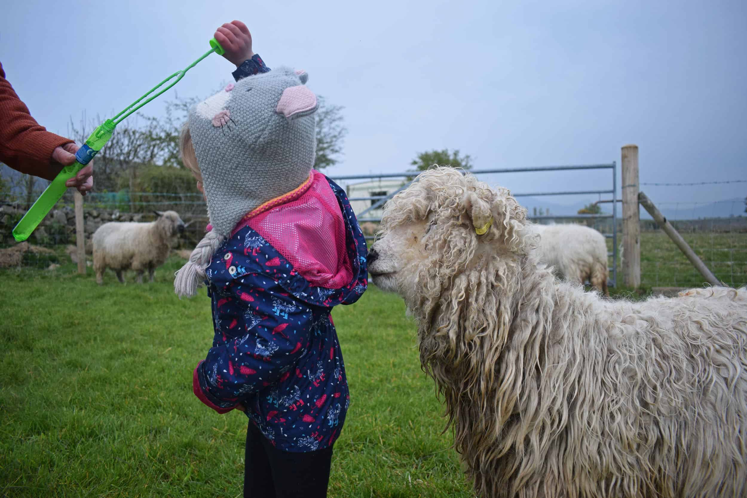 Merry gfd greyface dartmoor cute sheep vegetarian sheepskin rugs fleece grey face bubbles