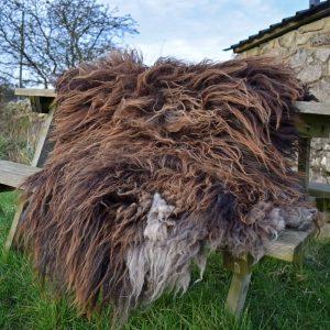 wild living wool rug