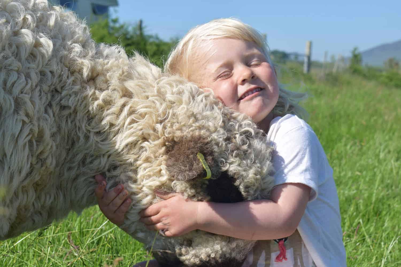 Nora valais blacknose greyface dartmoor pet sheep cuddle bear sheep patchworksheep crueltyfree felt rugs elsie