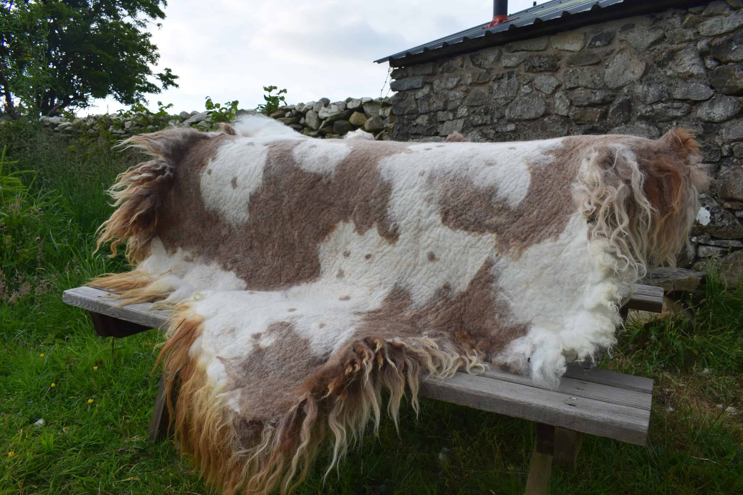 cow print wool Felted fleece rug vegetarian sheepskin dandelion living rug natural sheep friendly ethical wool sustainable