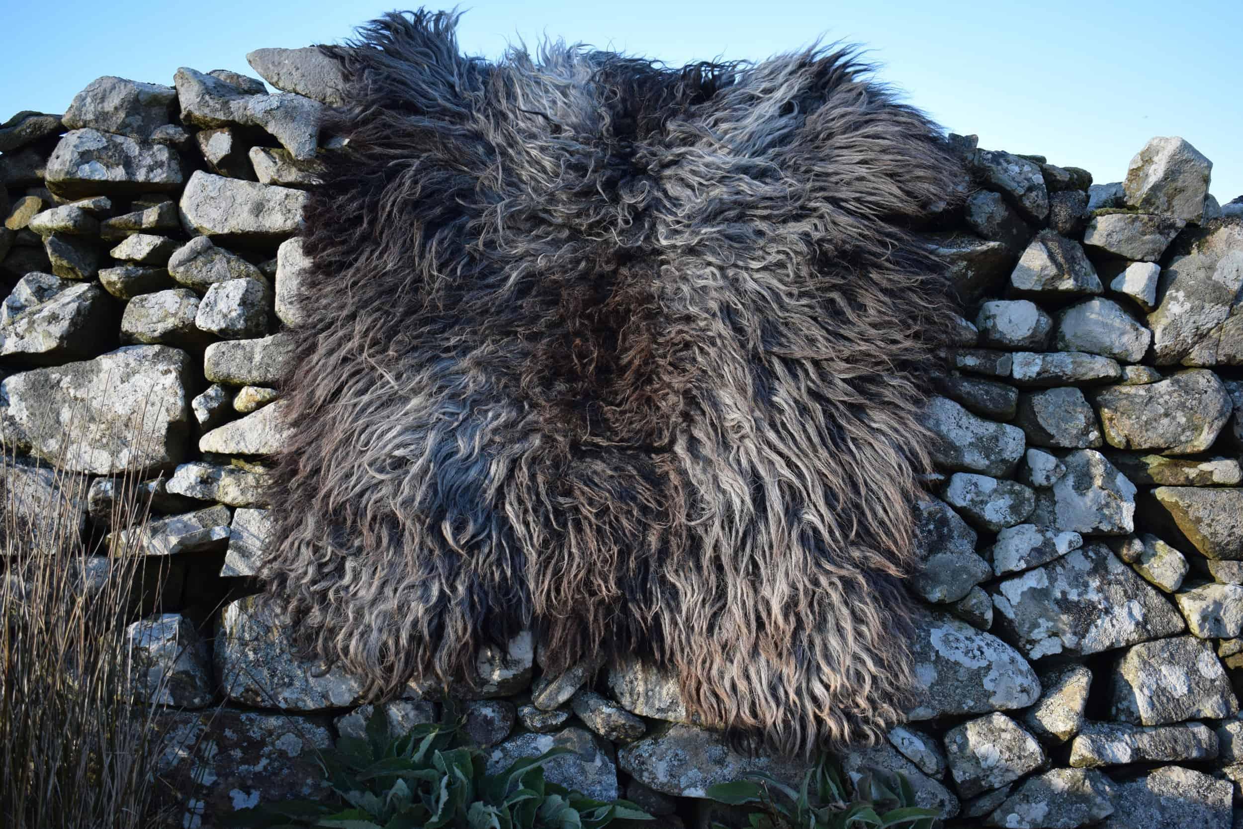 Gem felted fleece rug grey vegetarian sheepskinethical kindblack welsh mountain jacob shetland cross sheeo wild hairy black beauty