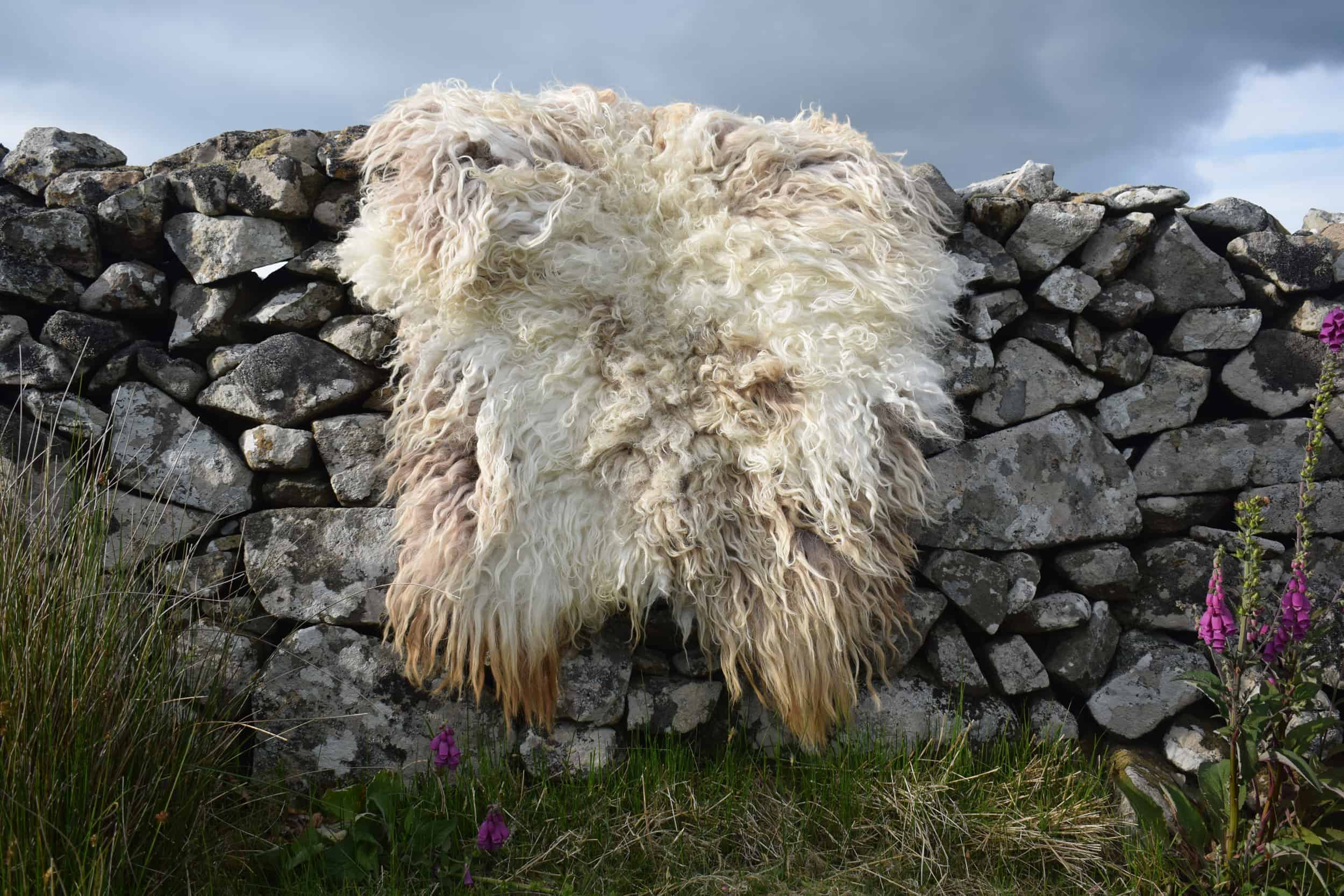 Felted fleece rug natural vegetarian sheepskin dandelion living rug natural sheep friendly ethical wool sustainable