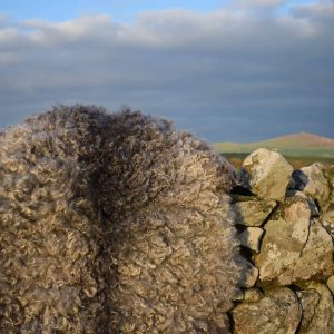 vegetarian sheepskin rug