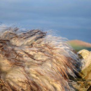 icelandic sheep fleece rug