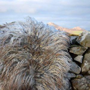 icelandic wool rug