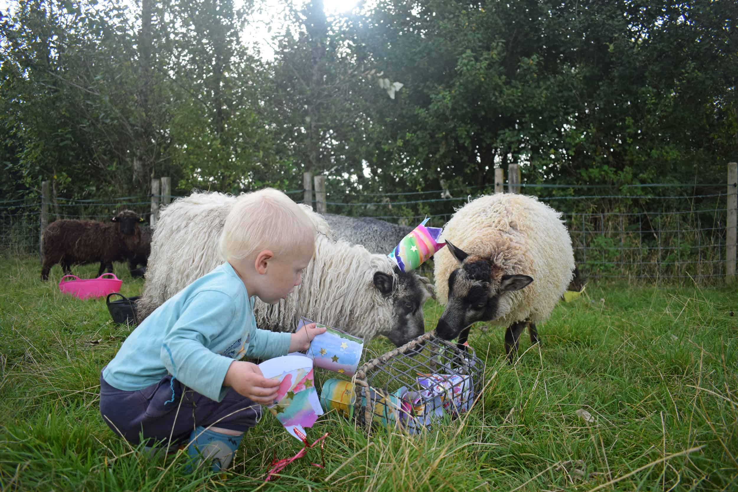 kids sheep party