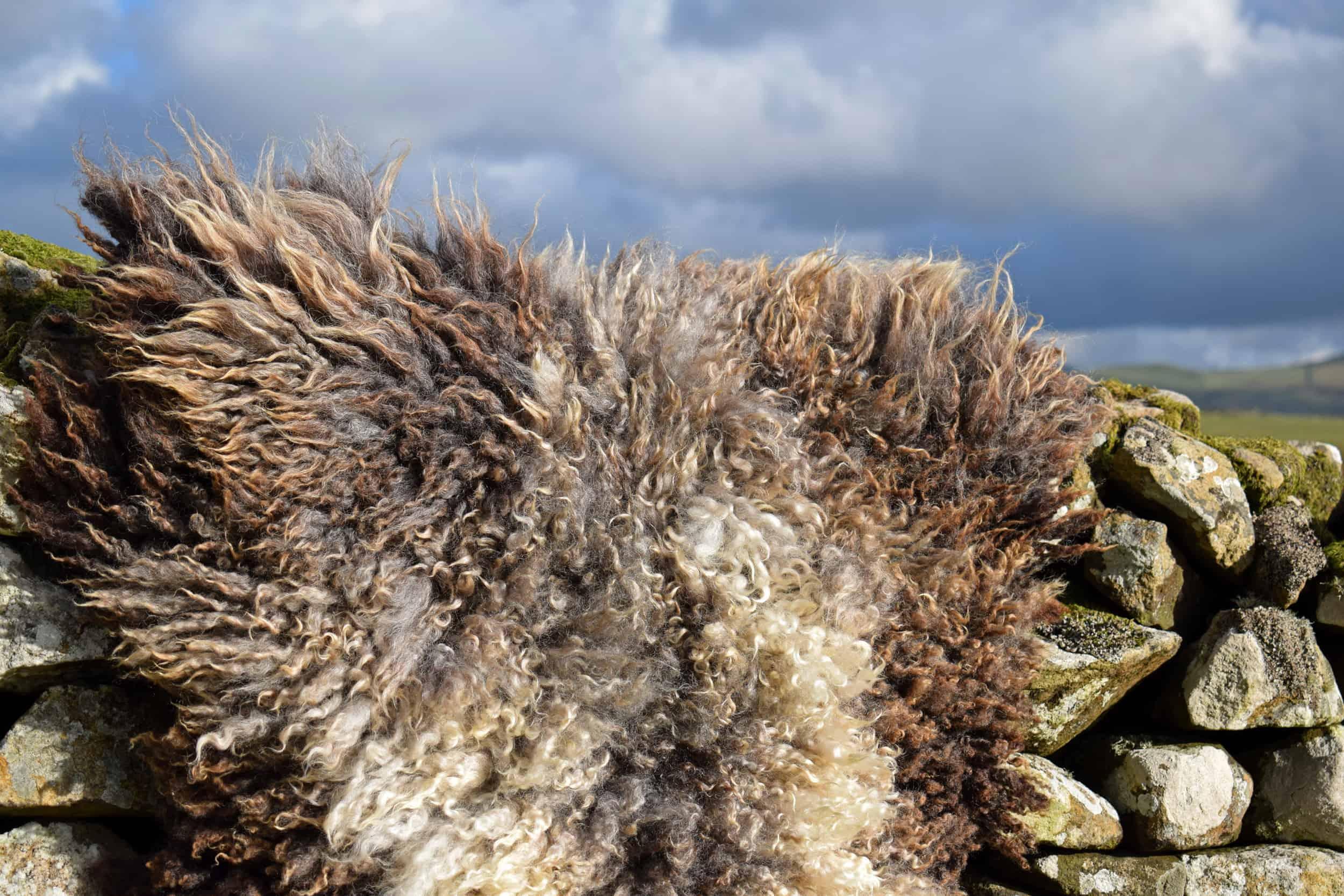 felted fleece rug bruno