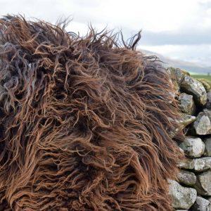 icelandic felted sheepskin