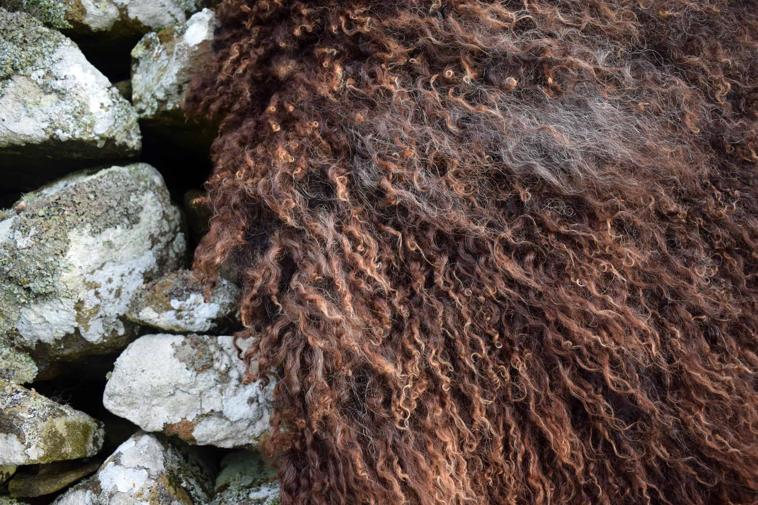 curly sheepskin rug