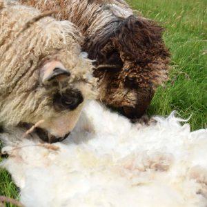 patchwork sheep felted fleece